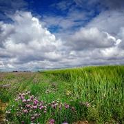 agriculture de bretagne andouar aromatique