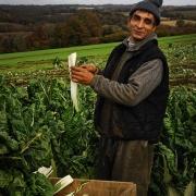 agriculture de bretagne andouar paysan