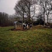 agriculture de bretagne andouar vaches
