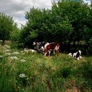 agriculture de bretagne andouar veaux