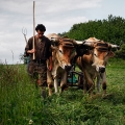 agriculture de bretagne andouar fauche