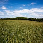 agriculture de bretagne andouar nature