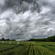 agriculture de bretagne andouar essai blé