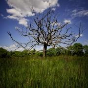 argoat paysages de bretagne arbre argol