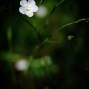 microcosme macrocosme fleur