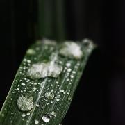 microcosme macrocosme eau