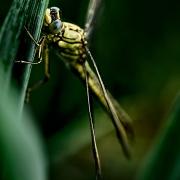 microcosme macrocosme libellule