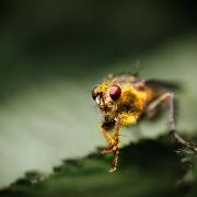 microcosme macrocosme abeille